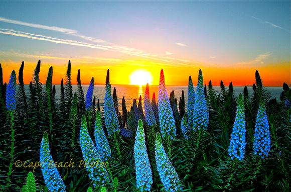 Pride Of Madeira Sunset